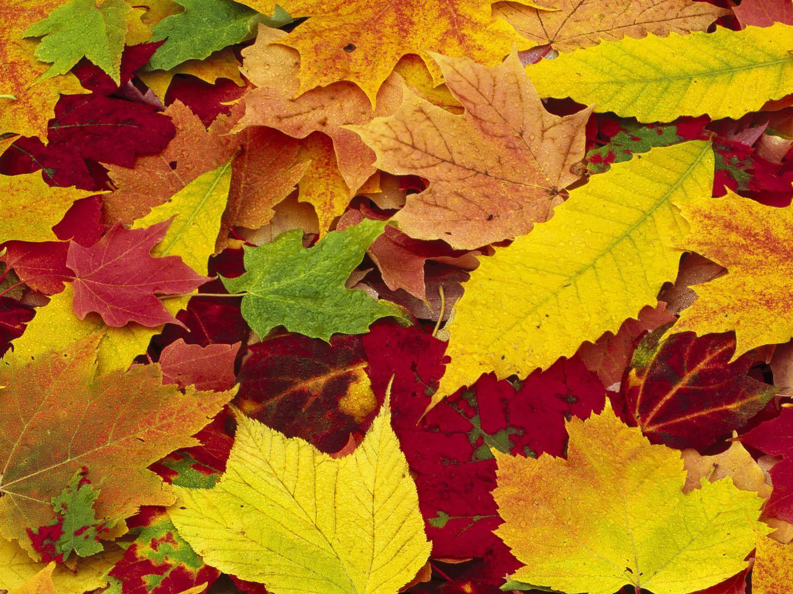 картина из листьев