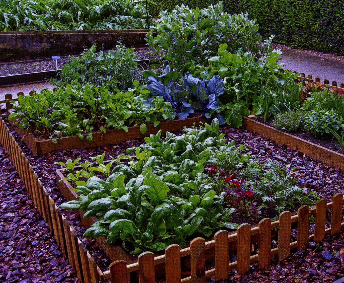 Посадить сад своими руками 247