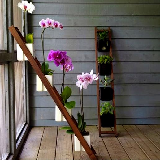 Орхидеи полка своими руками