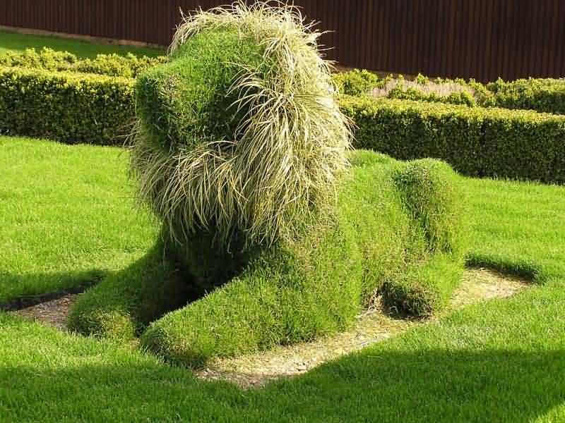 Как сделать фигуры из растений своими руками 83